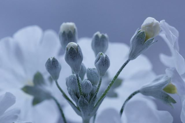 写真_静かに春を待つ1