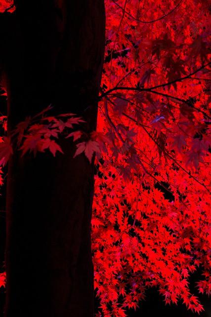 漆紅への誘い