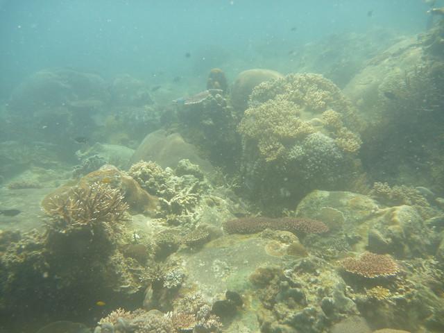 Tioman reef