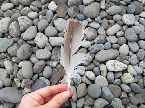 bird nature rock feather antarctica southshetlandislands turretpoint