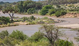 IMG_0463 Kenya
