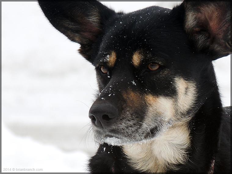 DSCN6395_dog