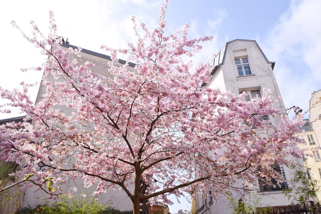 Le printemps à la Cité Leroy