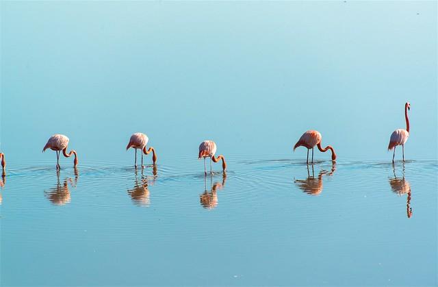 Peaceful flamingos
