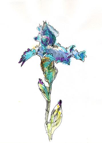 April 2014: Irises