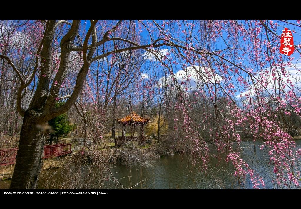►►► 紐約莊嚴寺 2014 ● DV ◄◄◄