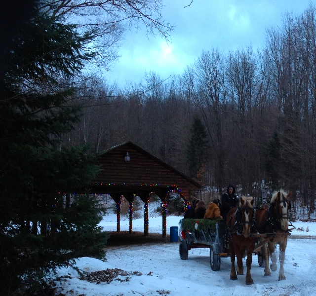Treetops sleigh ride dinner
