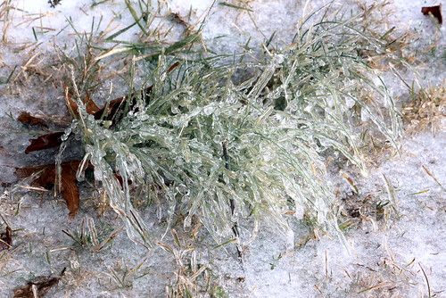 ashevillenc icepellets ashevillenorthcarolina iceongrass katharinehanna ashevillewinter ashevilleice