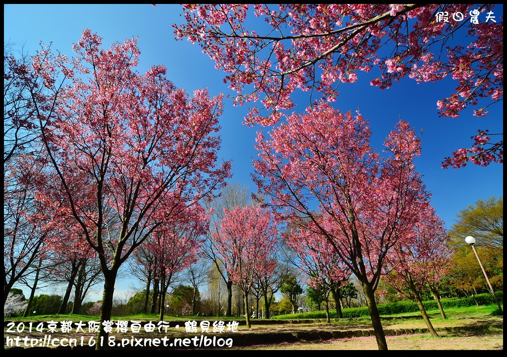 2014京都大阪賞櫻自由行.鶴見綠地DSC_1295