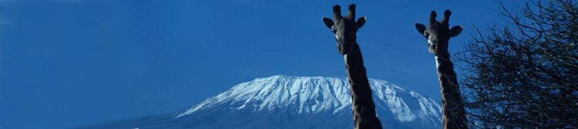 Trekking/Besteigung Kilimanjaro. Alles nur eine Frage der Perspektive. Foto: Bruno Baumann.