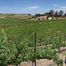 Temecula Wineries Panorama 2