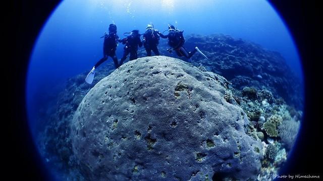 巨大アザミサンゴで記念撮影♪