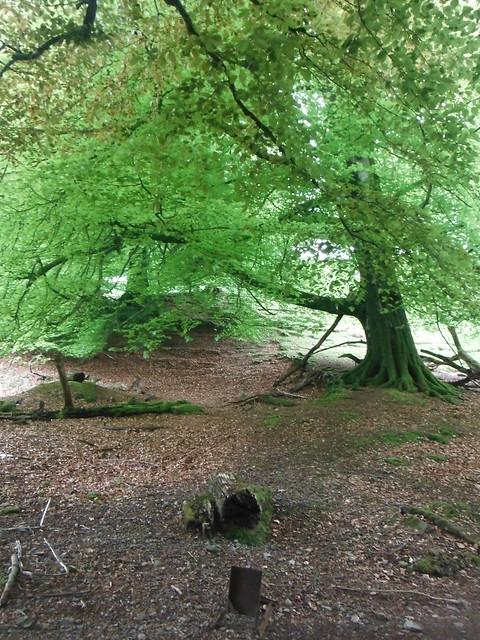 In the Woods 3, Fujifilm FinePix XP50