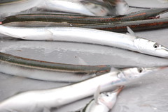 mackerel(0.0), cod(0.0), japanese amberjack(0.0), pacific saury(0.0), forage fish(0.0), bonito(0.0), jigging(0.0), capelin(0.0), barramundi(0.0), sardine(0.0), milkfish(0.0), animal(1.0), fish(1.0), fish(1.0), seafood(1.0), sauries(1.0), oily fish(1.0), shishamo(1.0),