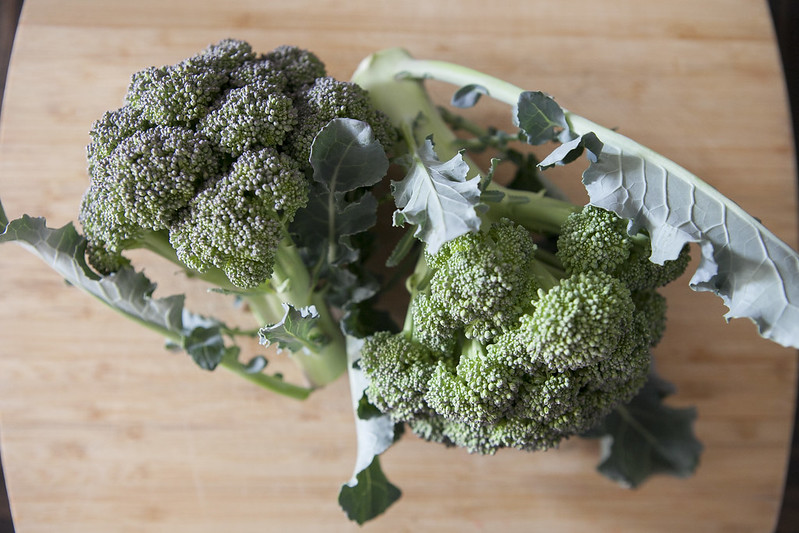 broccoli harvestIMG_2568_1