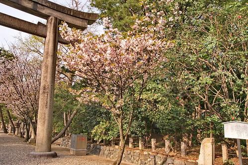 【写真】2013 桜 : 御香宮神社/2019-10-26/IMGP9737