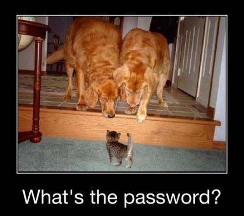 Password Needed