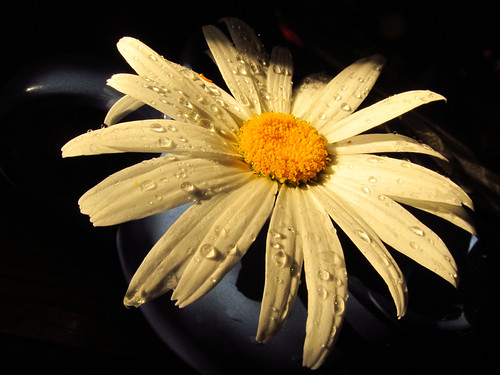light white cup water yellow contrast dark drops daisy project52