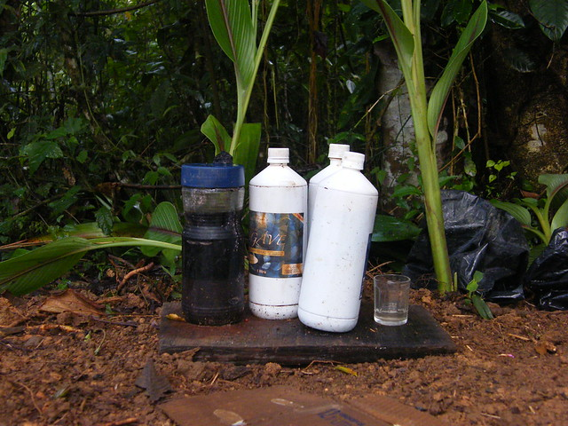 Magic Potions from the Rainforest