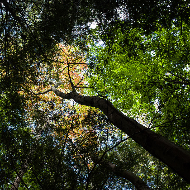 Color in the canopy