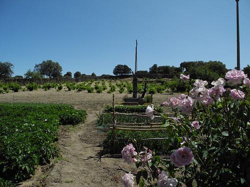 Cultivos de huerta