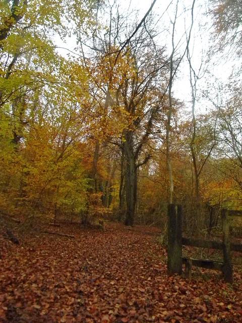Autumn colour 6