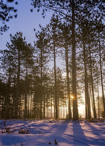 snow misty fog forest sunrise moody sunburst mortonarboretum