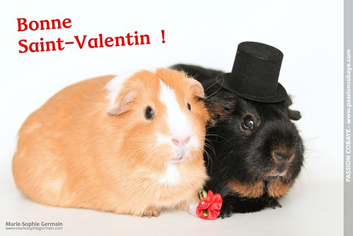 Pumpkin and Brüno celebrating Valentine's Day by Marie-Sophie Germain