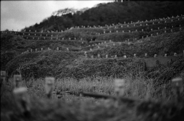 千枚田近景 - The thousand pieces of field near view