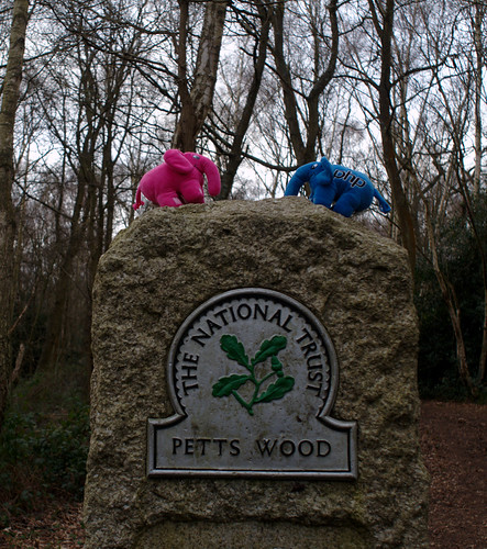 Mr. and Ms. Elephpant at Petts Wood
