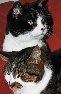 """The Cats (""""Smiffy"""" & """"Poppy"""") Canon EOS 40D & Sigma 70mm F2.8 Macro Lens"""