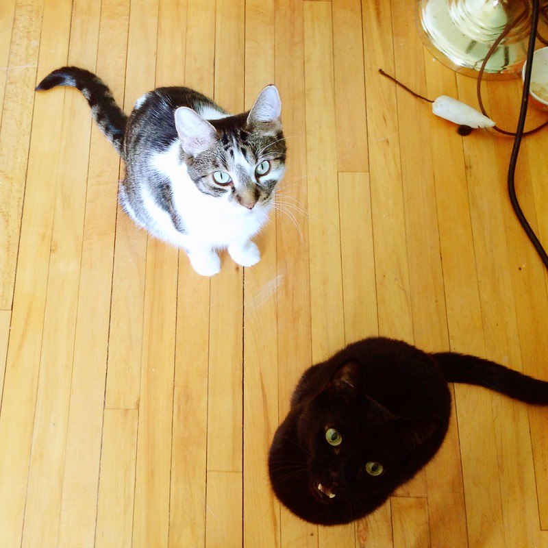 Onion and Oskar beg for tuna