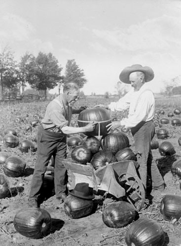 Measuring Pumpkins 1910