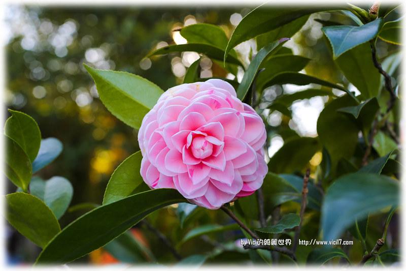 0119陽明山花卉中心010