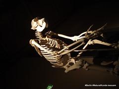 screenshot(0.0), skeleton(1.0), light(1.0), darkness(1.0),