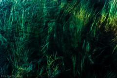 Ripples and Vegetation (ii)