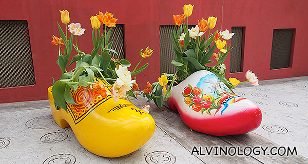More tulips in clogs