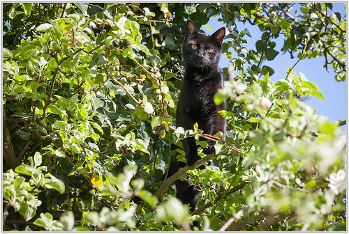 High above in the apple tree