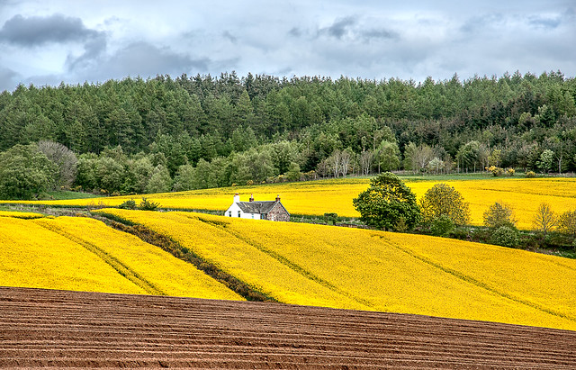 Spring in Perthshire