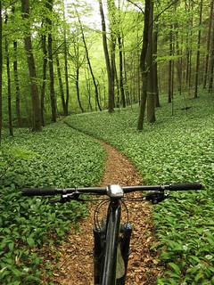Bärlauch Trail II