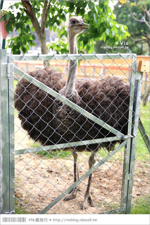 【彰化景點】克林姆莊園Cream Manor~小型動物園!戶外親子同遊好去處37