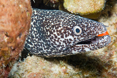 Under the sea - Belize