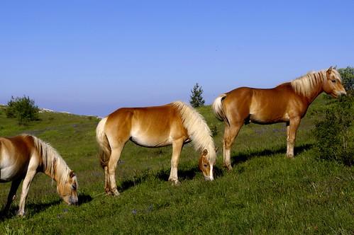horses landscape outdoor bulgaria