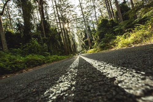 Kiolo🔺🔺🔺🔺🔺 #roadtrip #travelling #kioloa #pebbly #forest