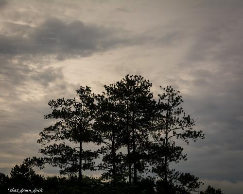 nature sunrise landscape dawn unitedstates southcarolina