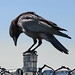Thinker Bird by canonshot1012