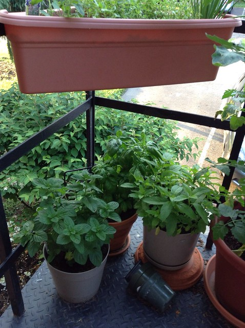 Spearmint, basil, peppermint