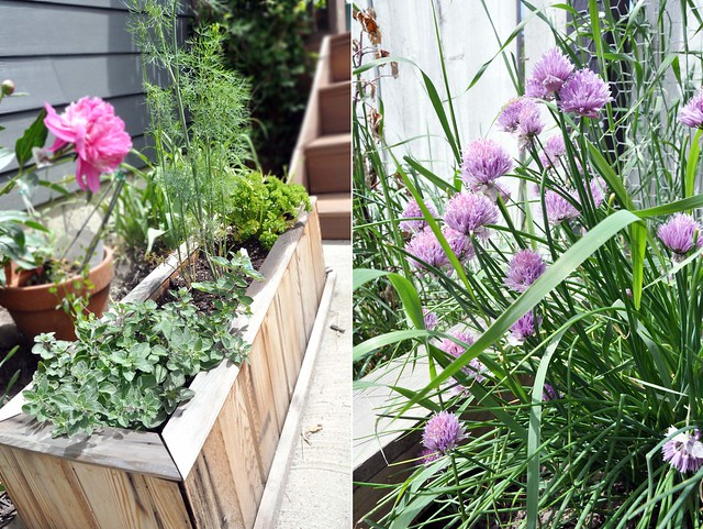 Herbs_Chives
