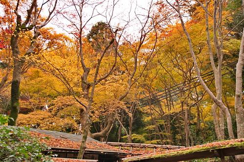 【写真】2012 紅葉 : 祇王寺/2021-09-05/IMGP7845