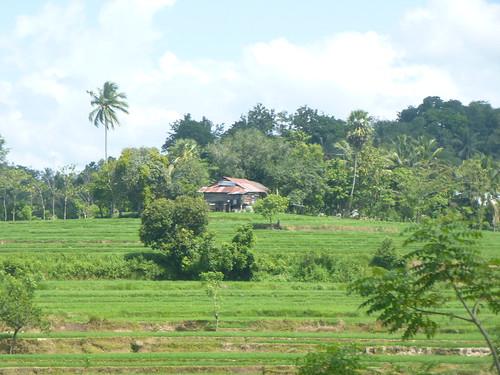 Sulawesi13-Bira-Bone-Kijang (28)